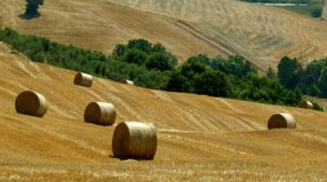 paesaggio_toscano.jpg
