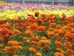 floricoltura.jpg
