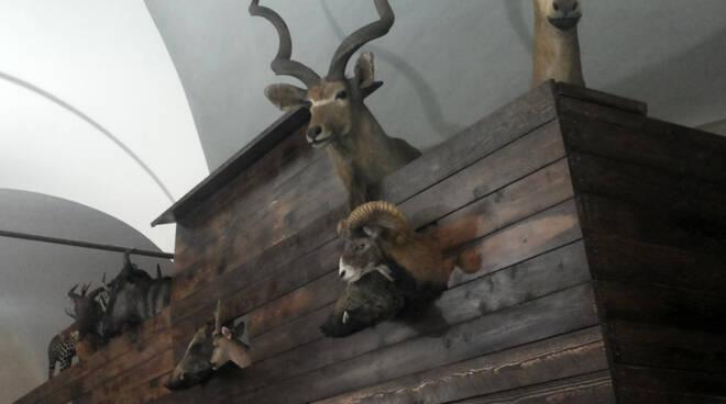 museo_storia_naturale_Calci.jpg