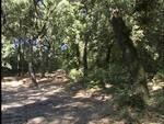 76-bosco-montagna-alberi-pineta--mpg-immagine001.jpg