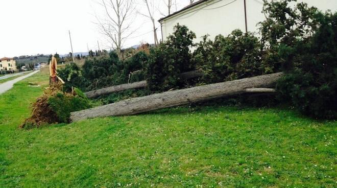 alberi_caduti_fucecchio2.jpg
