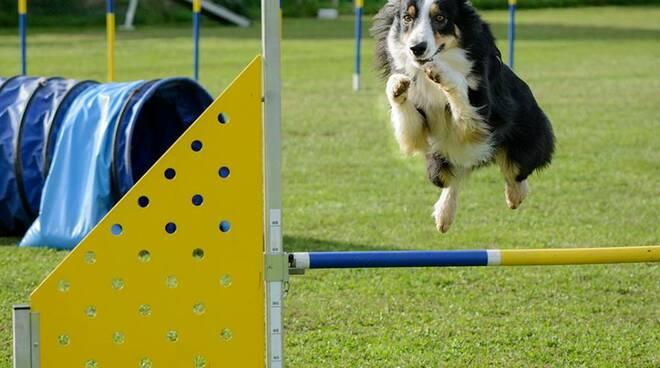 agilitydog.jpg