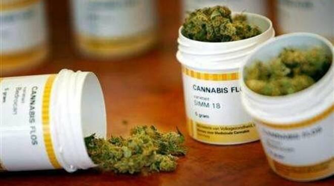 cannabis-per-uso-terapeutico.jpg