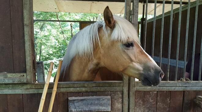 cavallo_1.jpg