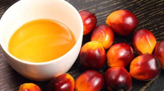 olio-di-palma.jpg
