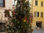 albero_castelfranco.jpg