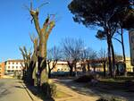 castelfranco2.jpg