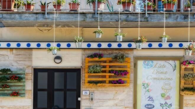 piante_prima_del_furto.jpg