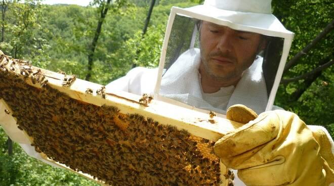 apicoltore.jpg