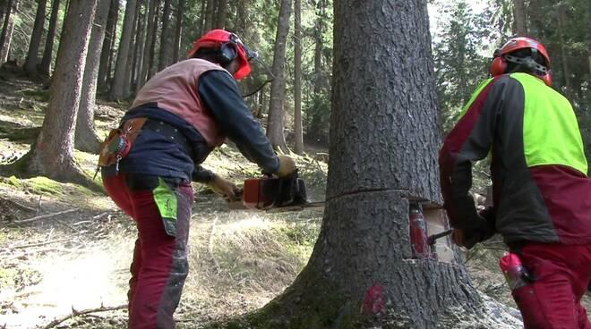 taglio_alberi.jpg