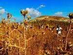 agricoltura-campo-estivo.jpg