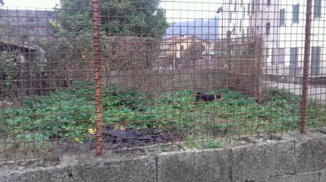 caninozzano.jpg