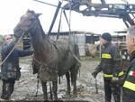 cavallo_pompieri.jpg