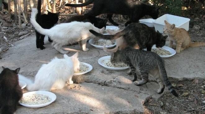 gatti-randafi-colonie-feline.jpg