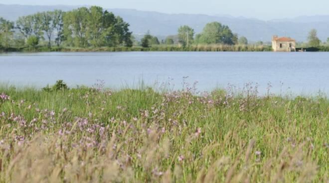Lago_della_Gherardesca.jpeg