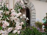 20180528_giardino-fiorito.jpg