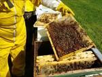apicoltura.jpg