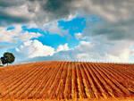 agricoltura-vigna.jpg