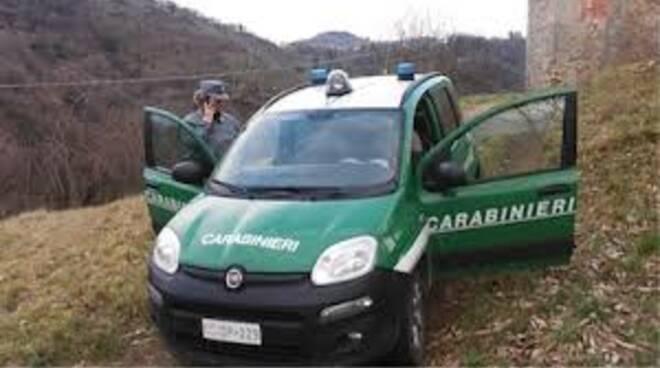 carabinieriforestali.jpg