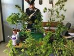 carabinierimarijuana.JPG