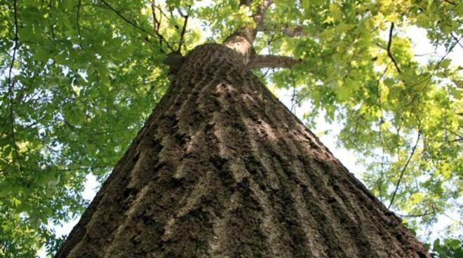 albero-quercia-550.jpg