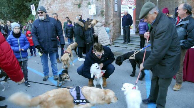 benedizione-animali-san-antoni-cuoio-in-diretta_cani.jpg