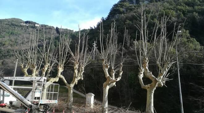 Foto_potatura_alberi_Valdicastello_24_Gennaio_2019.jpeg