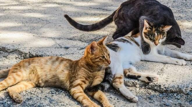 colonie-feline-653x367.jpg
