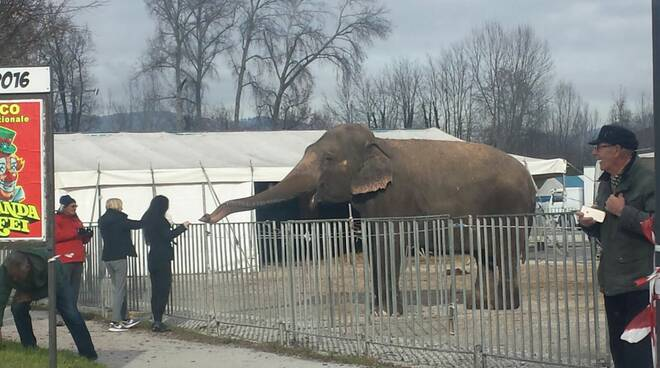 elefantecirco.jpg