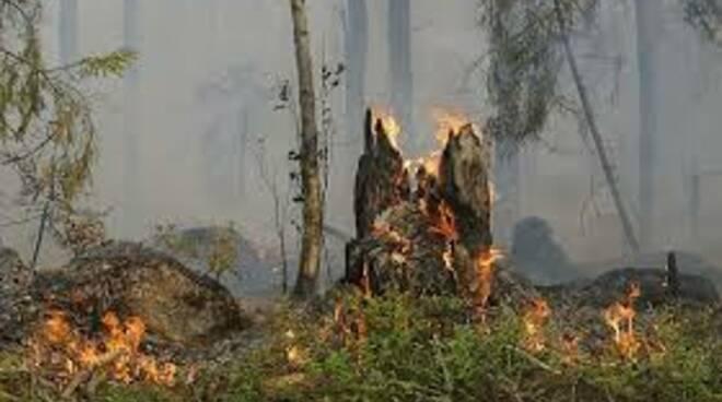 incendioboscoc.jpg