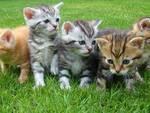 colonia-felina.jpg
