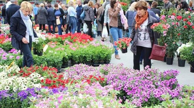 Foto-piante-e-fiori-in-piazza-esplode-la-primavera-a-km-zero_articleimage.jpg