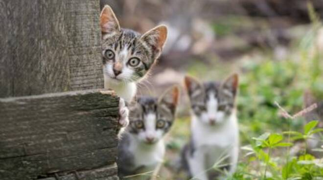 gatti-cortile-id30254.jpg