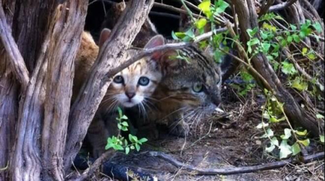 gattini1.jpg