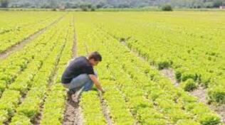 agricoltori.jpg