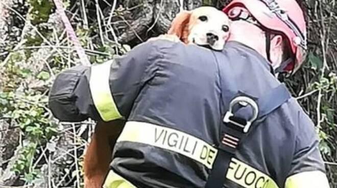 cane-salvato-dai-vigili-del-fuoco-la-spezia.jpg