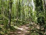 foresta_6.jpg