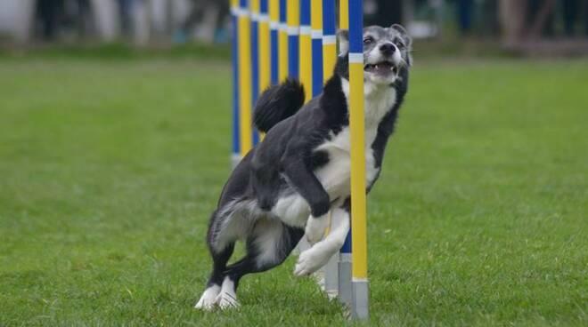 agilitydog2.jpg
