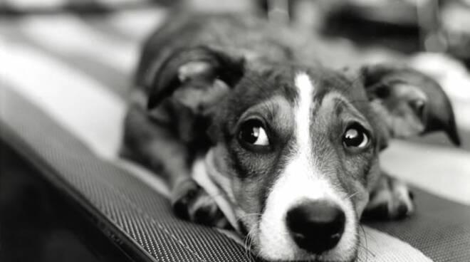 cane-spaventato.jpg