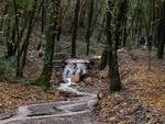 Foresta_Toscana.jpg