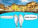 sardinelucca.jpg