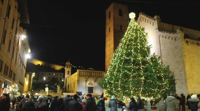 abete di Natale a Pietrasanta