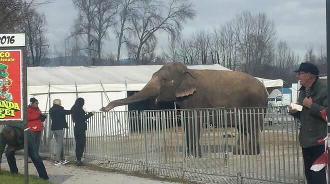 Animali al circo