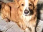 Cane Scooby smarrito Maggiano