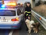 Cani salvati dalla polizia stradale
