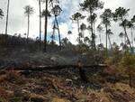 incendio Capannori aree boscate