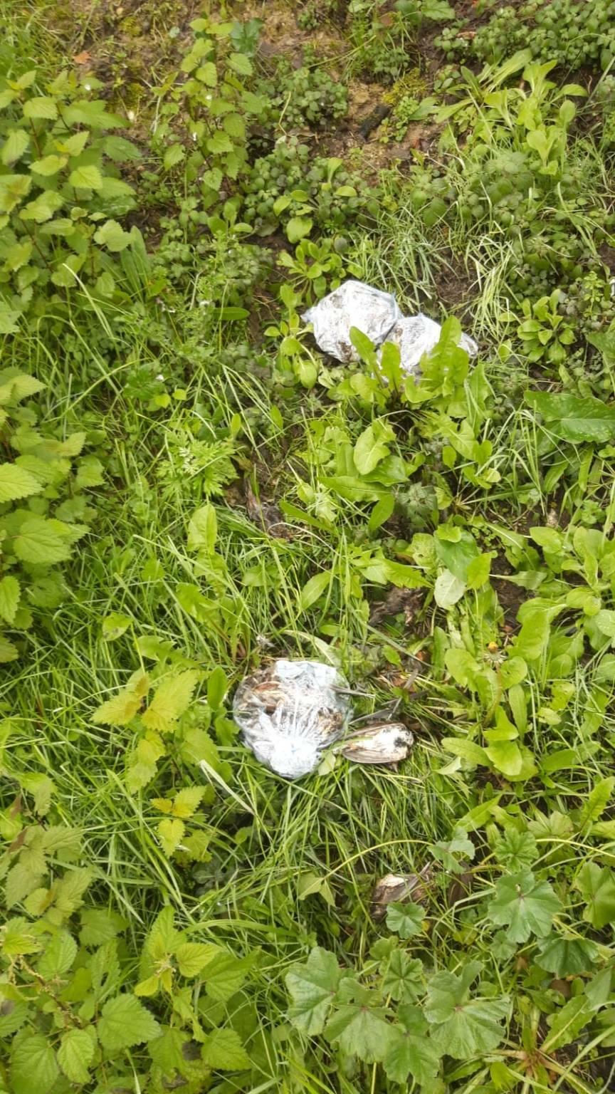 Animali fatti a pezzi e sparsi in strada a Montopoli
