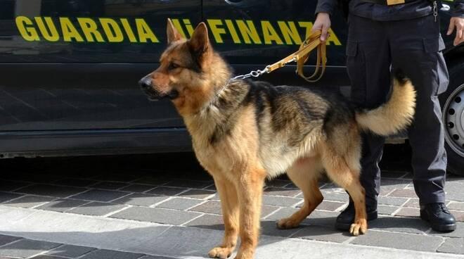 cane droga guardia di finanza pisa