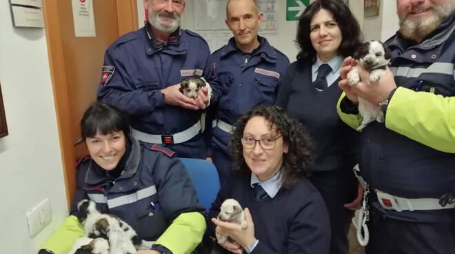 cucciolata Camaiore ritrovata polizia municipale