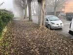 Foglie secche sul marciapiede